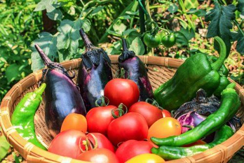野菜・栄養バランス