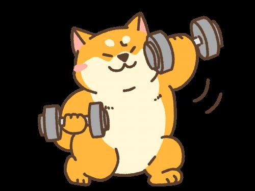 健康的に太る筋トレ・体づくり